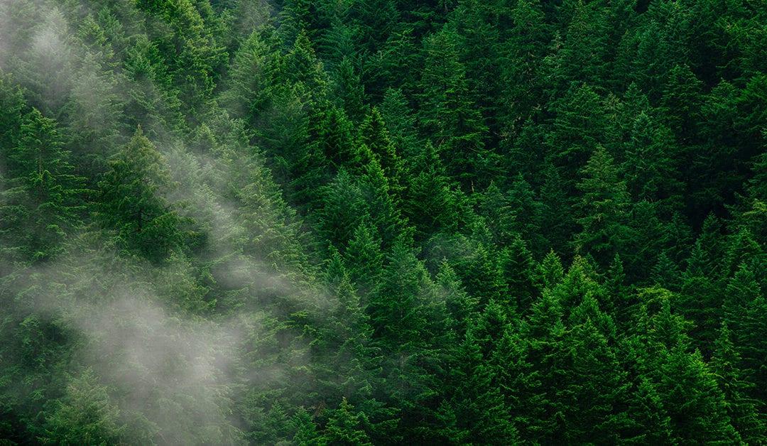 Latin Lawyer destaca asesoría de Fischer y Cía. en adquisición de predios forestales por más de US 385,5 millones